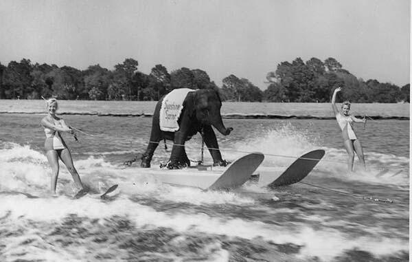 13.-Queenie-the-skiing-elephant-1950