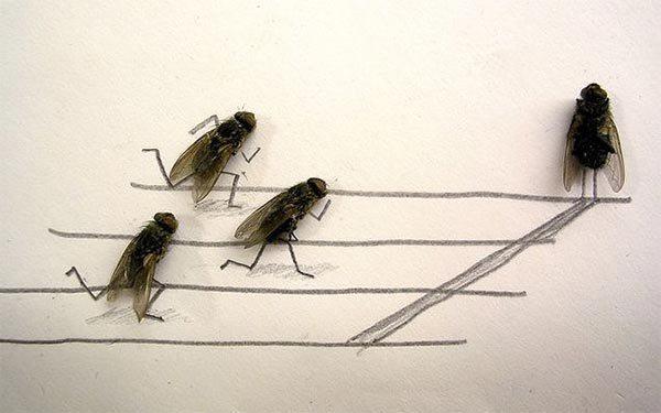 dead_flies_art1