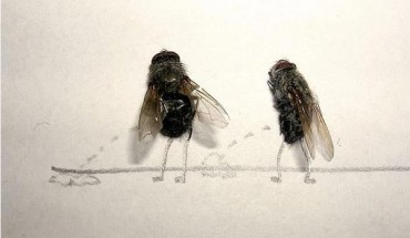 dead_flies_art2