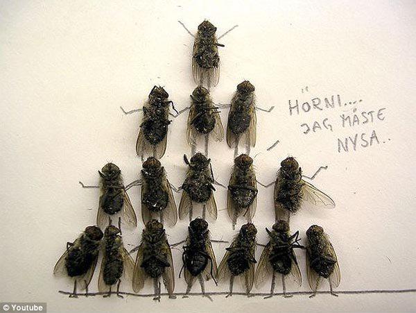 dead_flies_art7